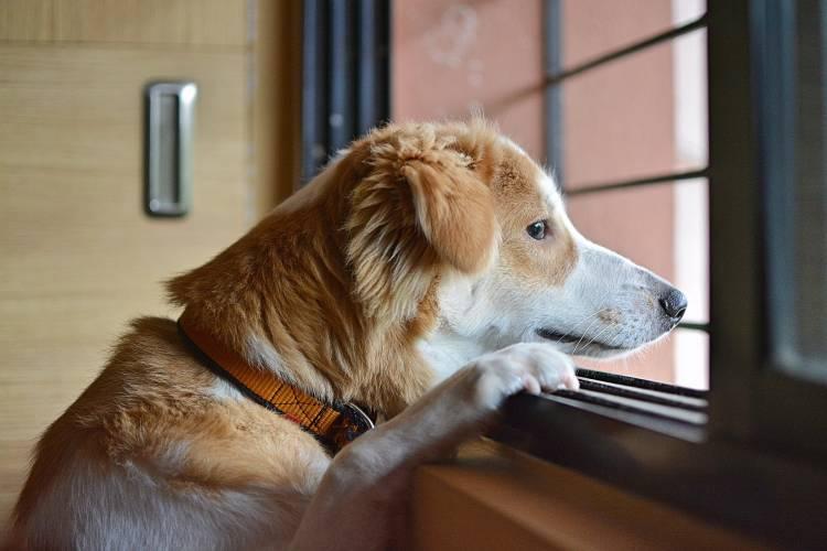 Remedios naturales para la ansiedad del perro