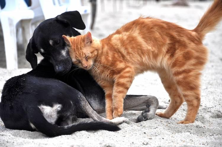 Cómo cuidar de tus mascotas cuando se hacen mayores