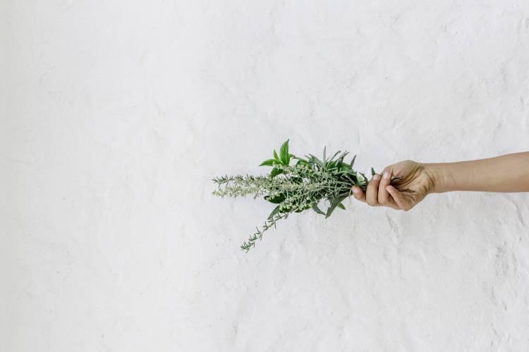 Hierbas para aliviar los sofocos de la menopausia