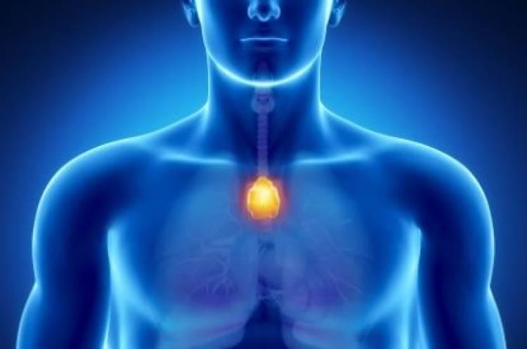 Estimular la glándula timo para fortalecer el sistema inmunológico