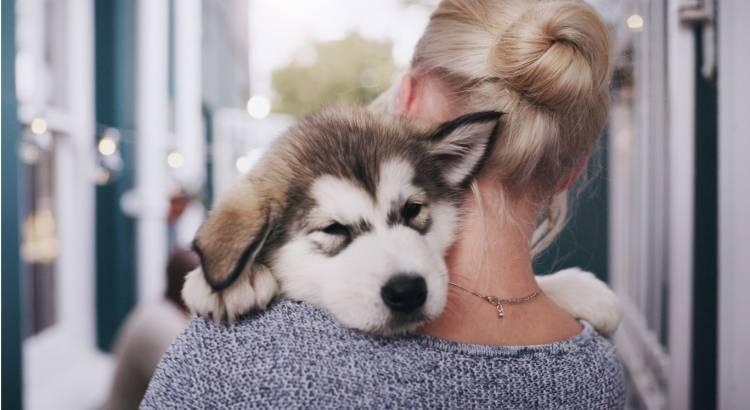 Prepárate para la llegada de una mascota