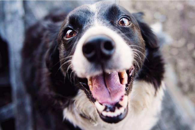Consejos para los dientes de tu mascota