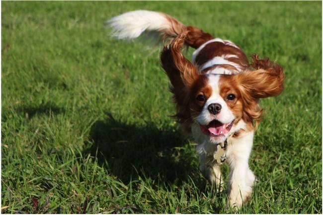 Suplementos para las articulaciones de tu perro